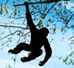 _monkey-1_1