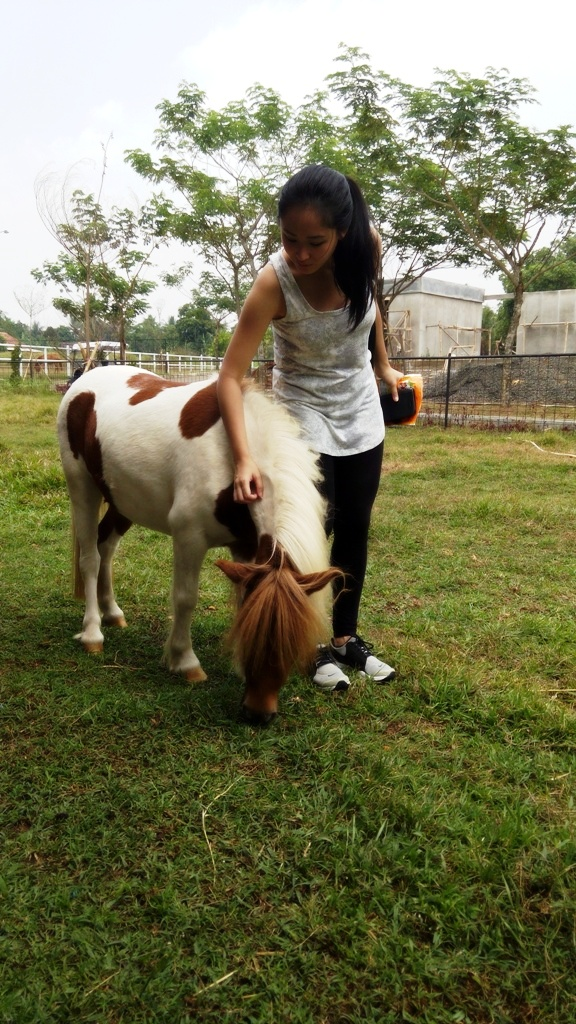 belajar berkuda di apm equestrian centre teppy and her other sides rh thefreakyteppy com Baby Horse Animal Baby Horse Animal
