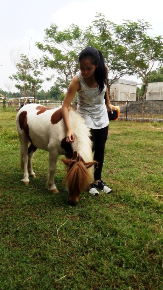 Kuda Poni (5)