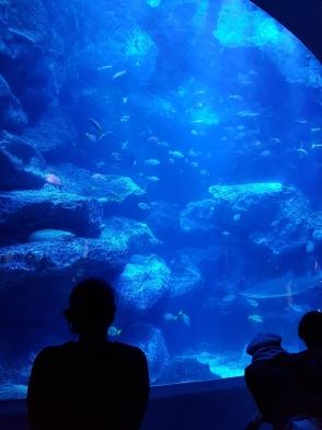 Sumida Aquarium (7)